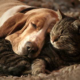 cat pillow-dog blanket by Szilvia Pap-Kutasi (bodza)) on 500px.com