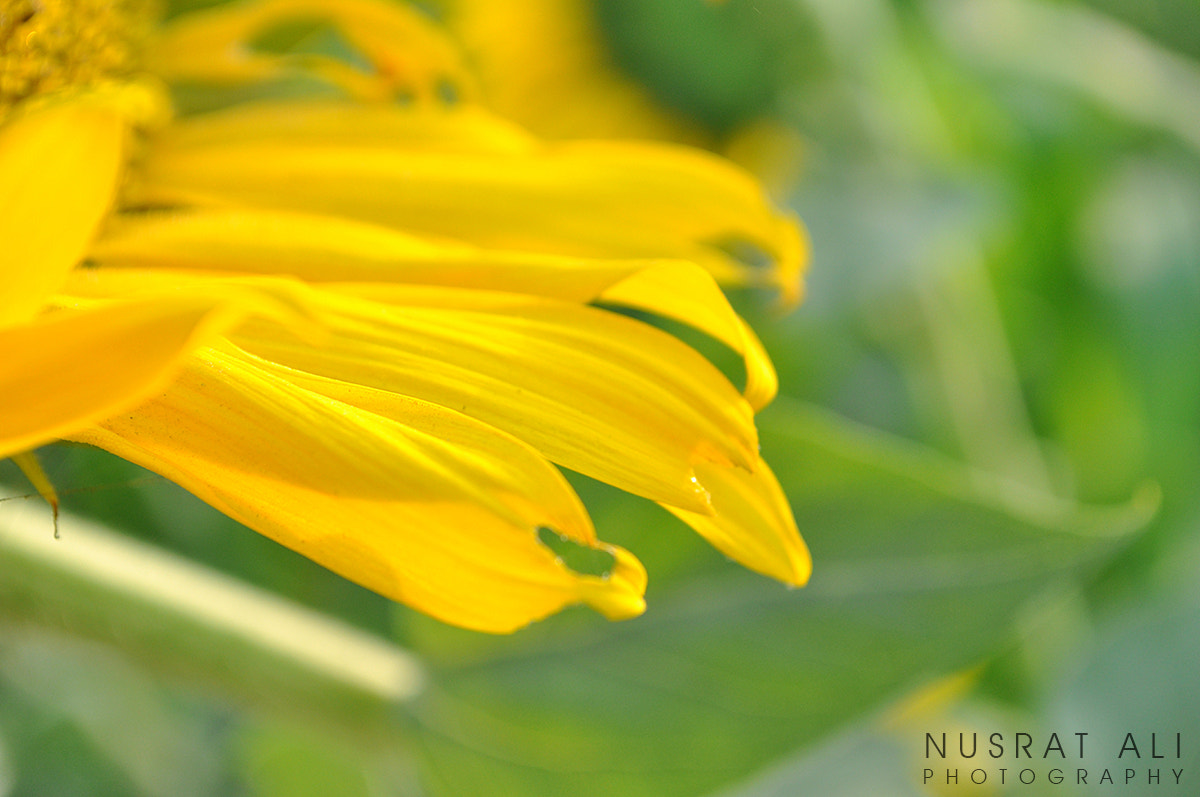 Photograph sunflower leaves by Nusrat Ali on 500px