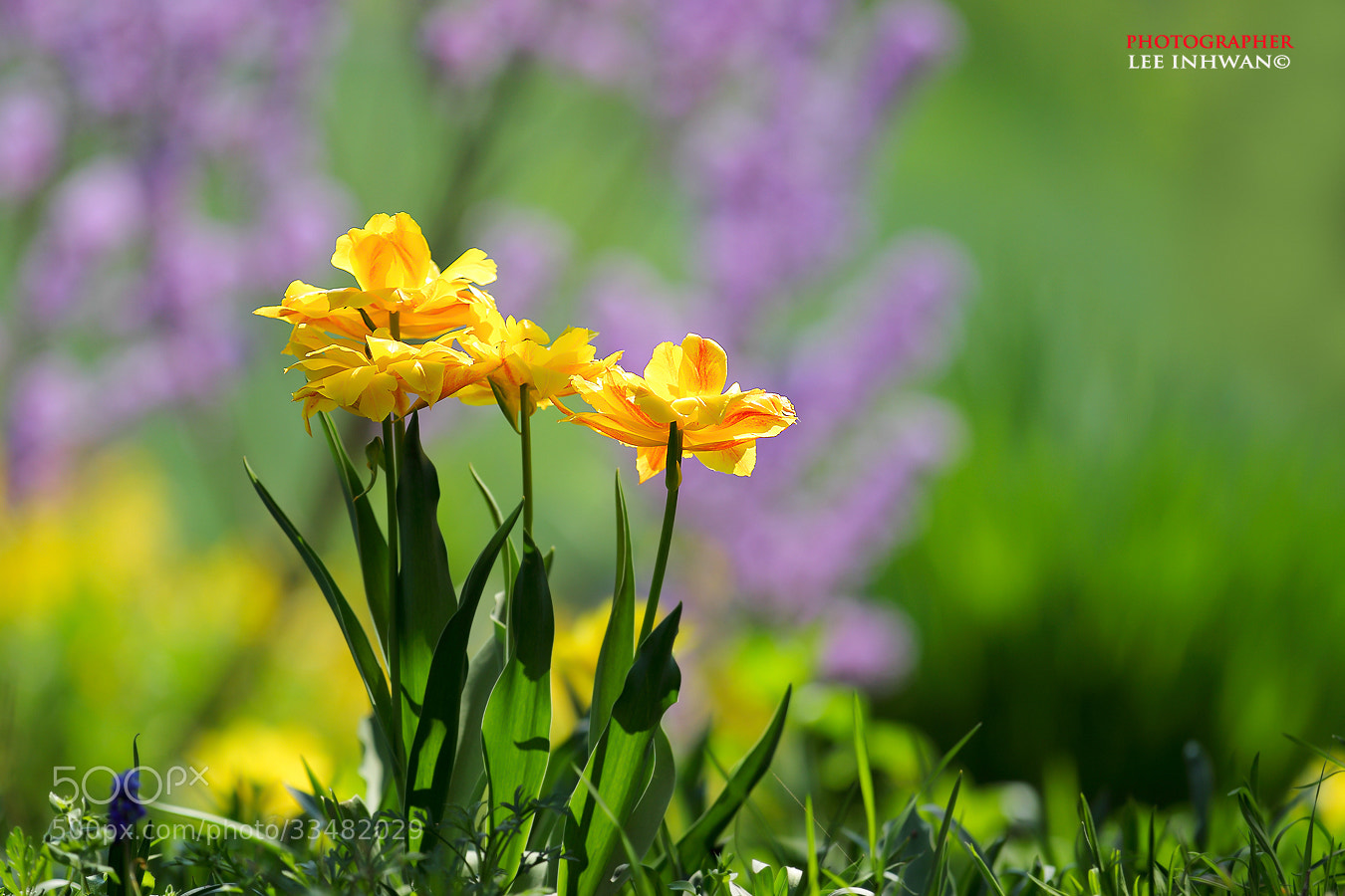 Photograph Brilliant spring by LEE INHWAN on 500px