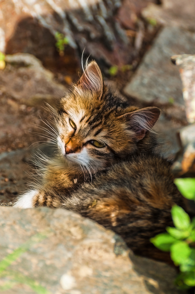 Photograph The sleepy cat by Jorge Orfão on 500px