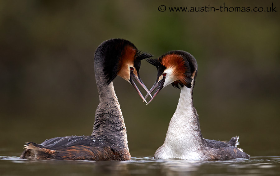 Love on the lake...