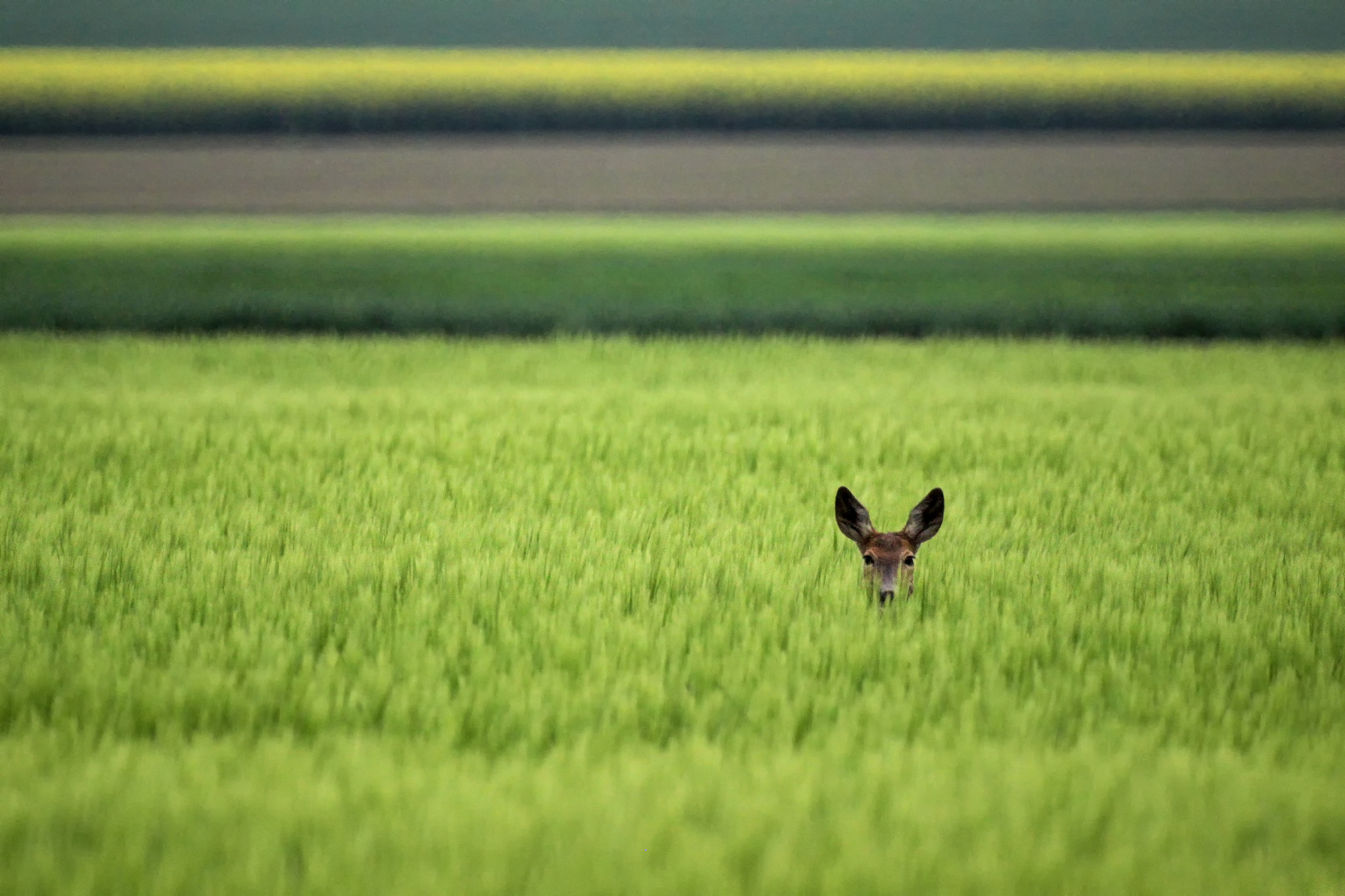 Photograph Peek-a-boo by Norbert Fritz on 500px