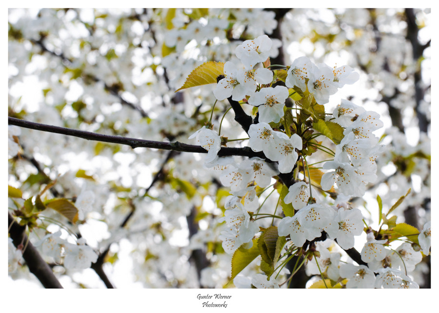 Photograph power of spring by Gunter Werner on 500px