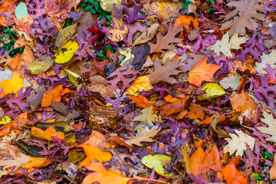the fallen leaves with great colors is what autumn leaves behind.