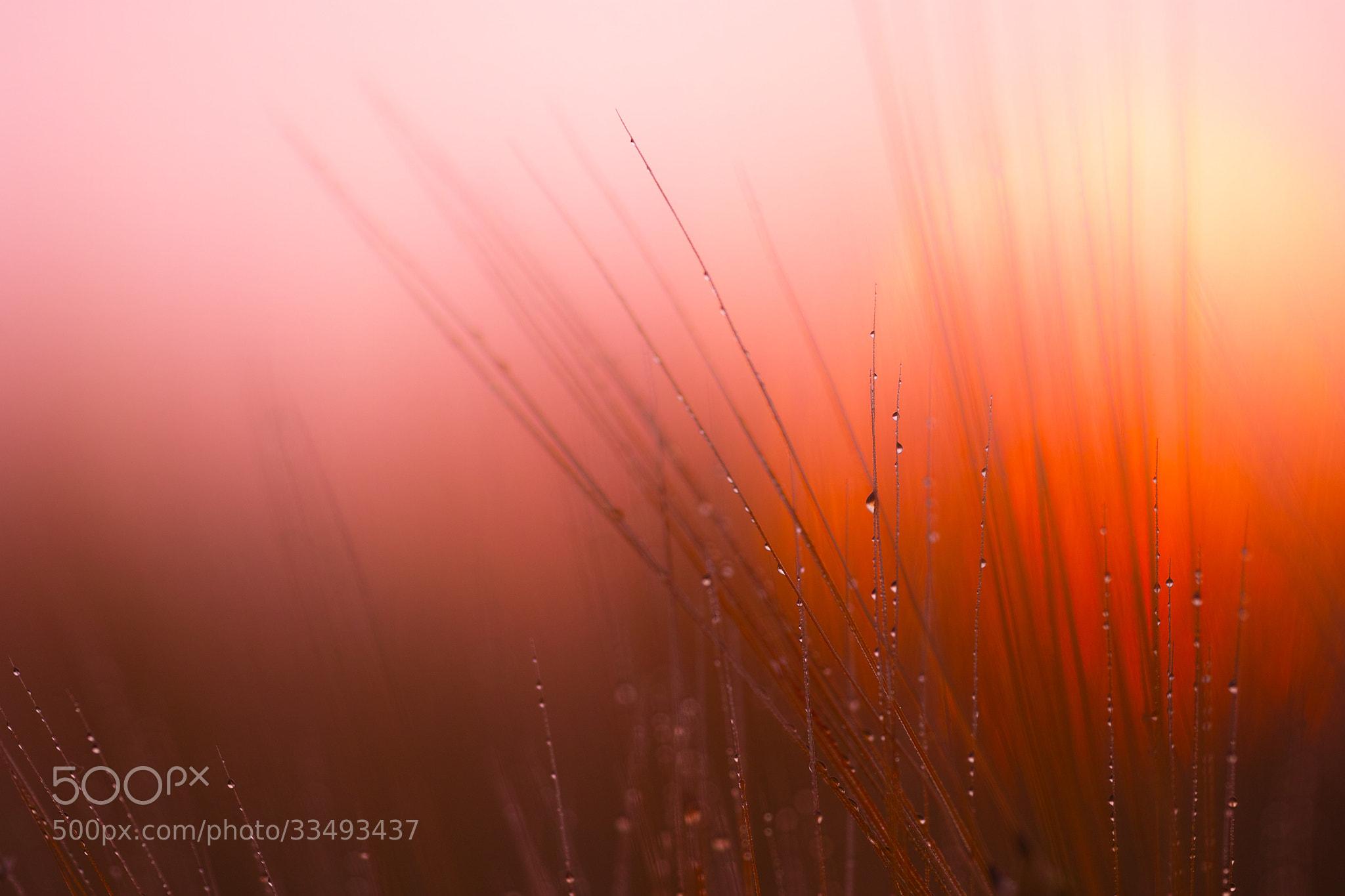 Photograph SUN RISE by  Taneda Kazunori on 500px