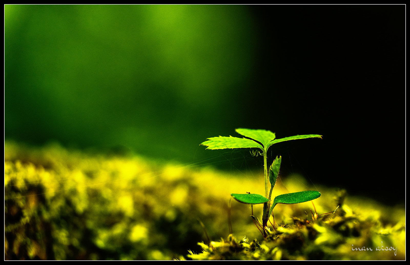 Photograph A new life begins by Inan Aksoy on 500px