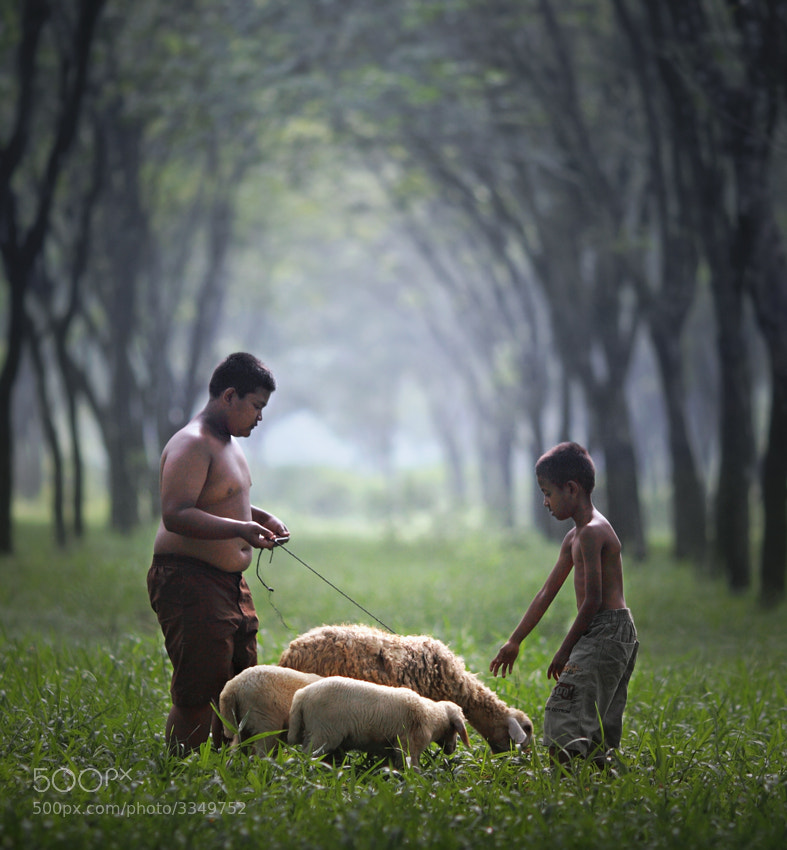 Photograph goat herders by firdaus musthafa on 500px