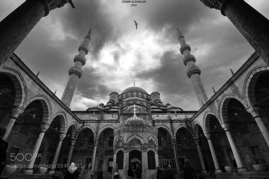 Photograph The Flying Bird by Osamh Alshaalan on 500px