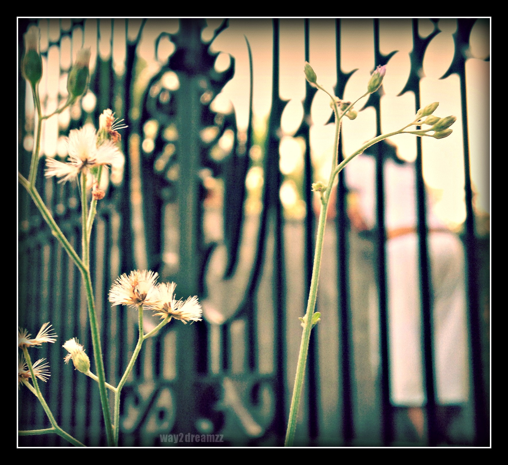 Photograph The spring's already at the gate..! by Way 2 Dreamzz on 500px