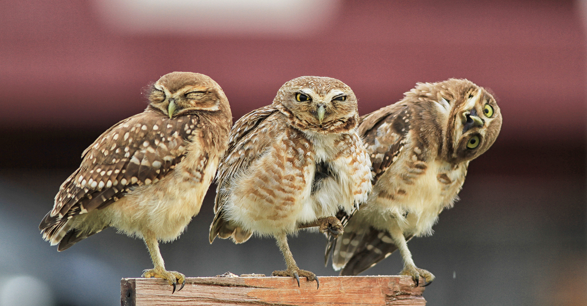 Photograph Brothers II by Itamar Campos on 500px