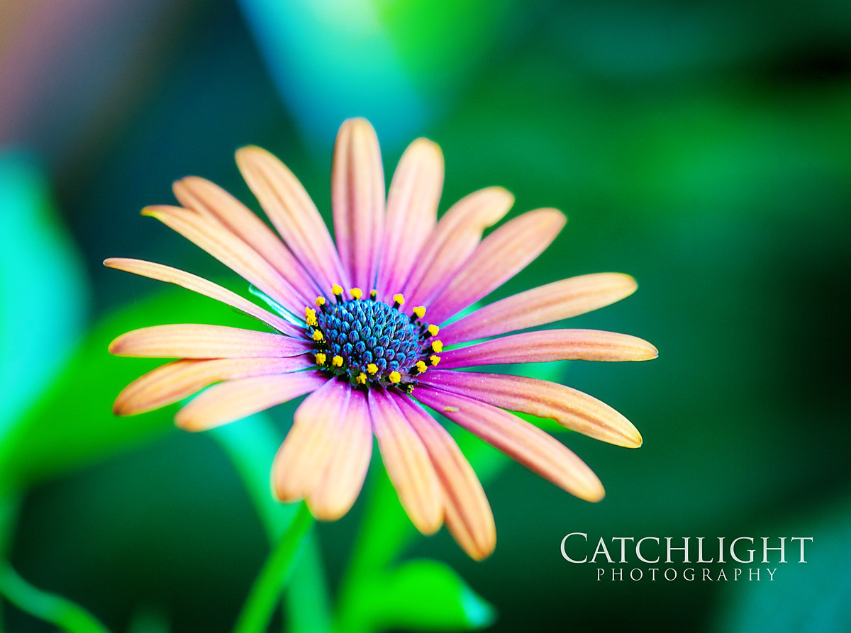Photograph Colorful Flower by Tammy Smith on 500px