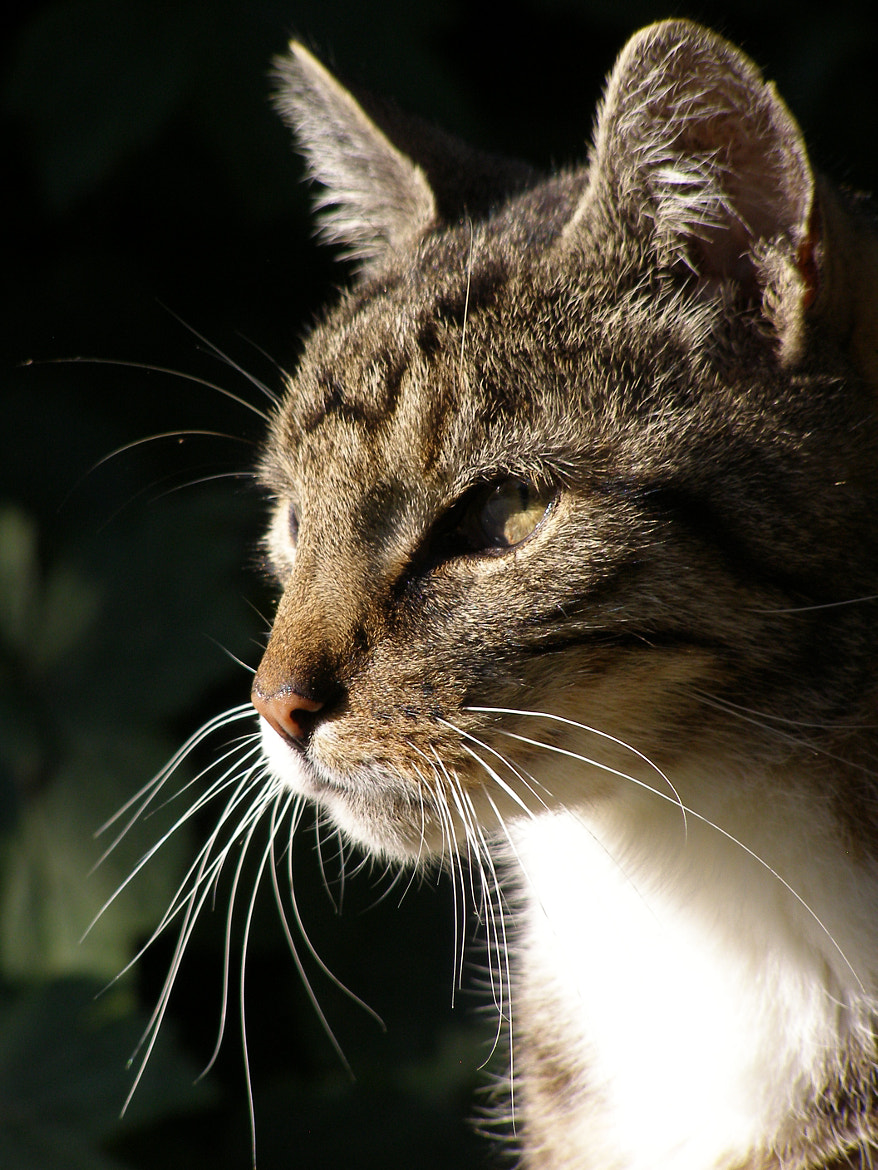 Photograph Whiskers by Sandra Buitendijk on 500px