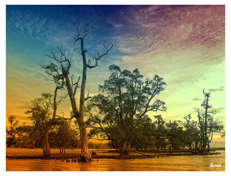 Photograph trees in the dressing color by Teuku Heri on 500px