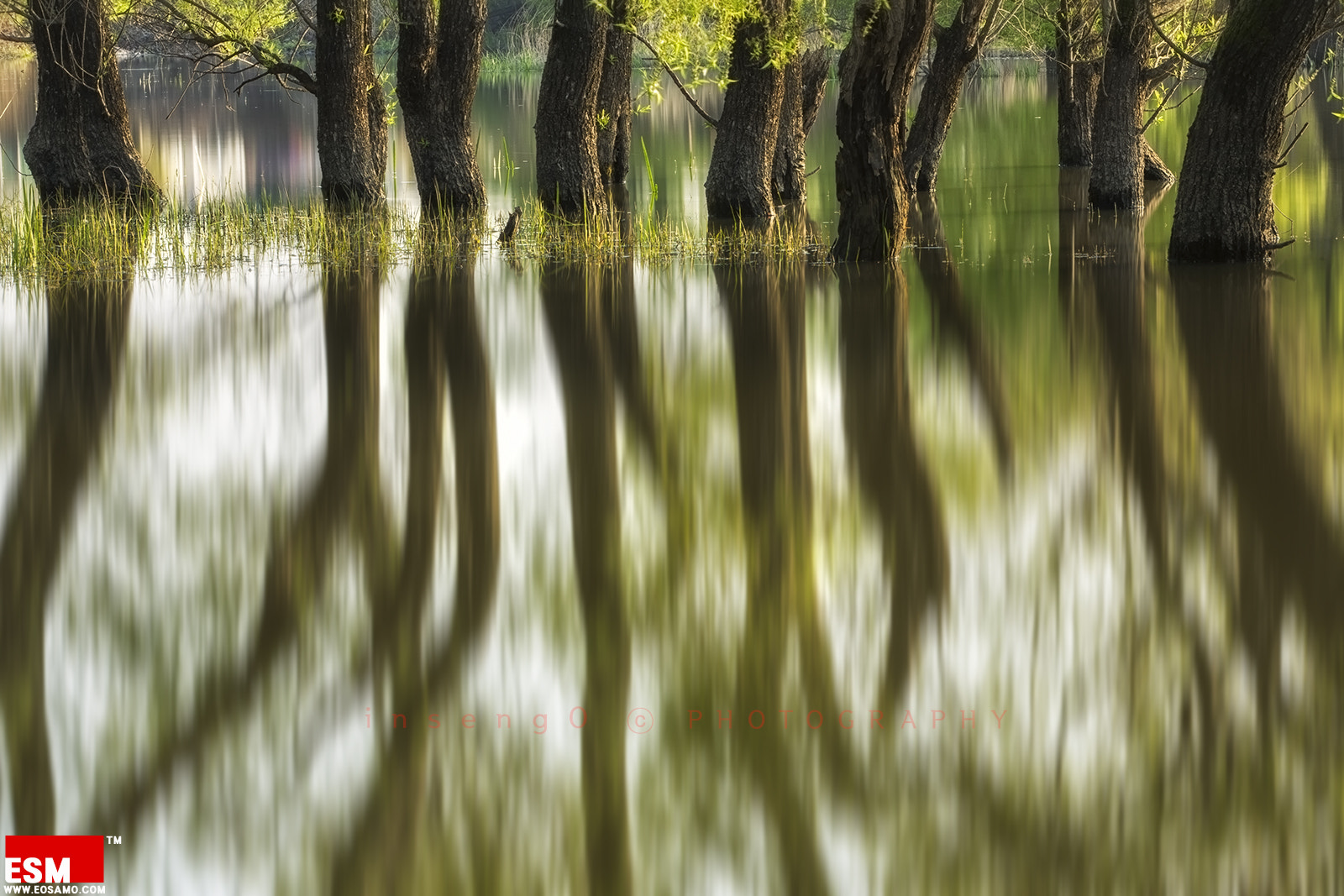 Photograph SPRING by chan-wook Kim on 500px