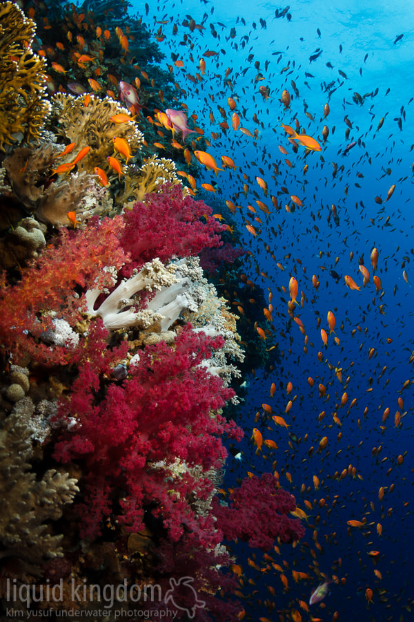 Photograph Red Sea reef scene XII by Kim Yusuf on 500px