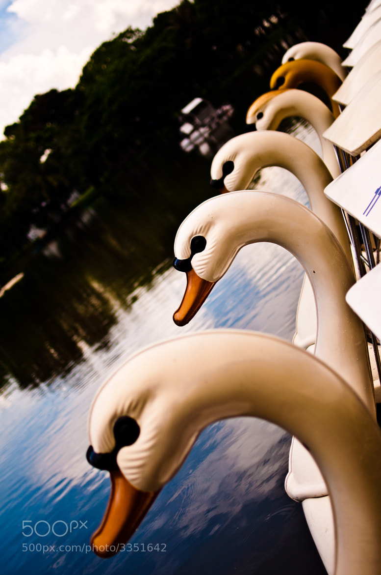Photograph Lumpini Swan Boats by Mark Fischer on 500px