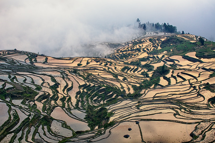 Rice Terraces in the Fog by Josh Anon on 500px.com