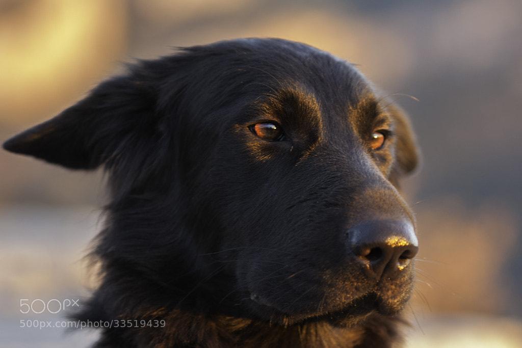 Photograph Pretty dog by Xavi Virgili on 500px