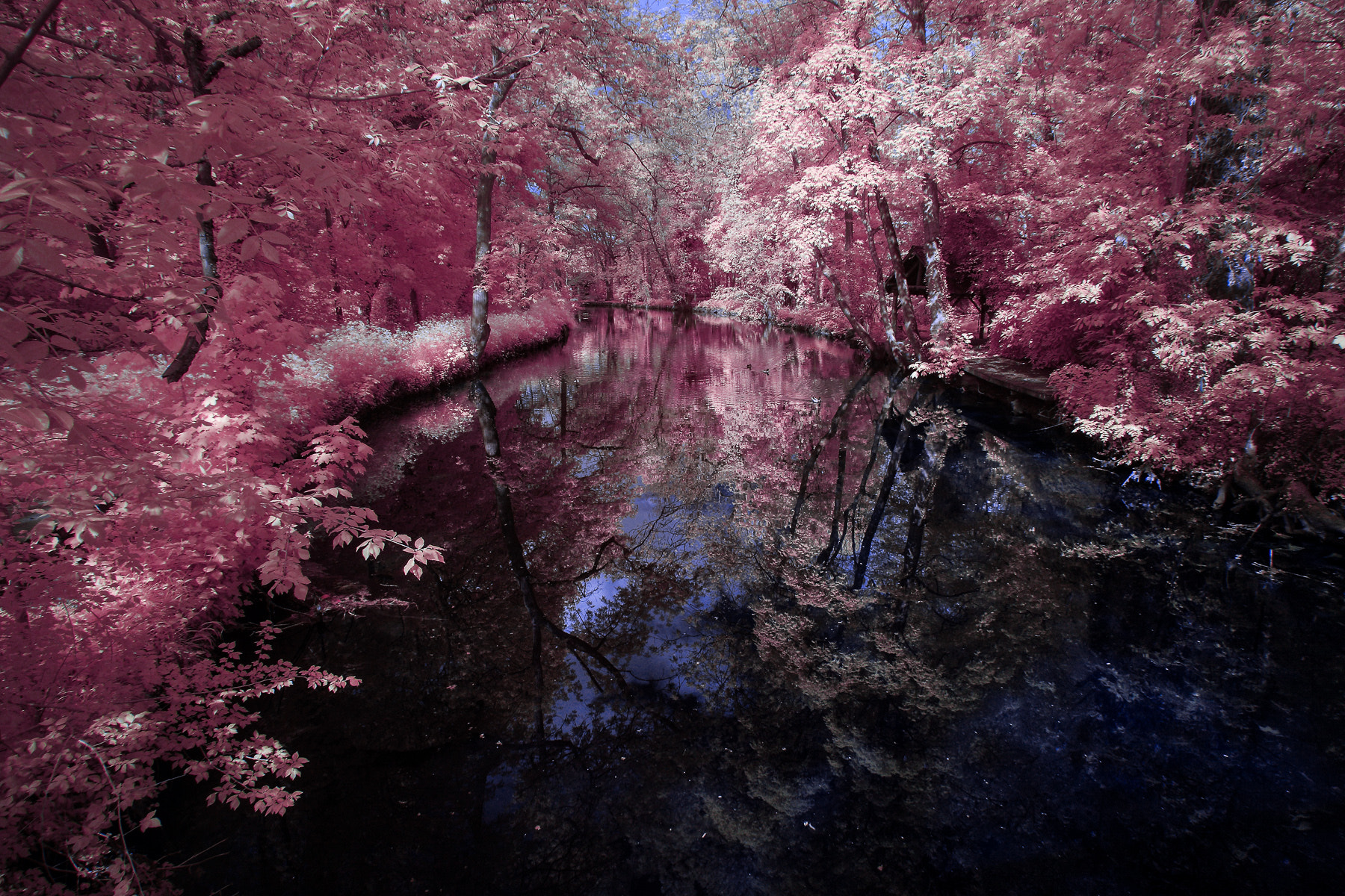 Photograph Infrared by herve bourderon on 500px