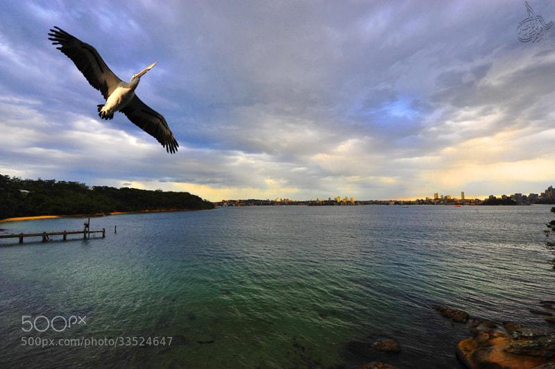 Photograph In Australia by Ibraheem Alnassar on 500px