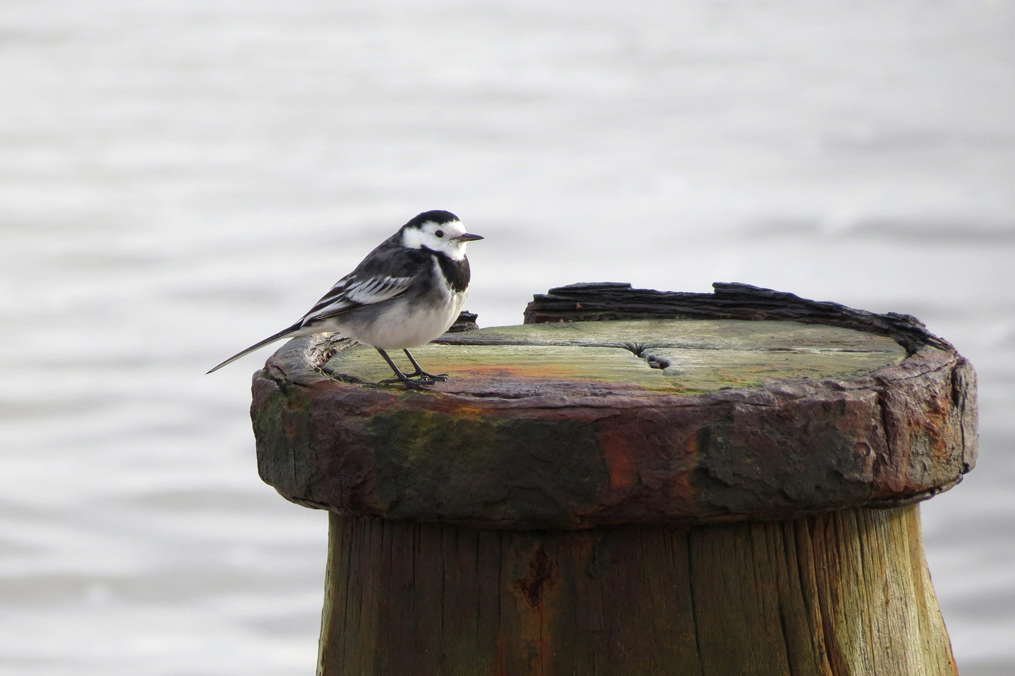 Photograph wagtail waiting by Anne Slater on 500px