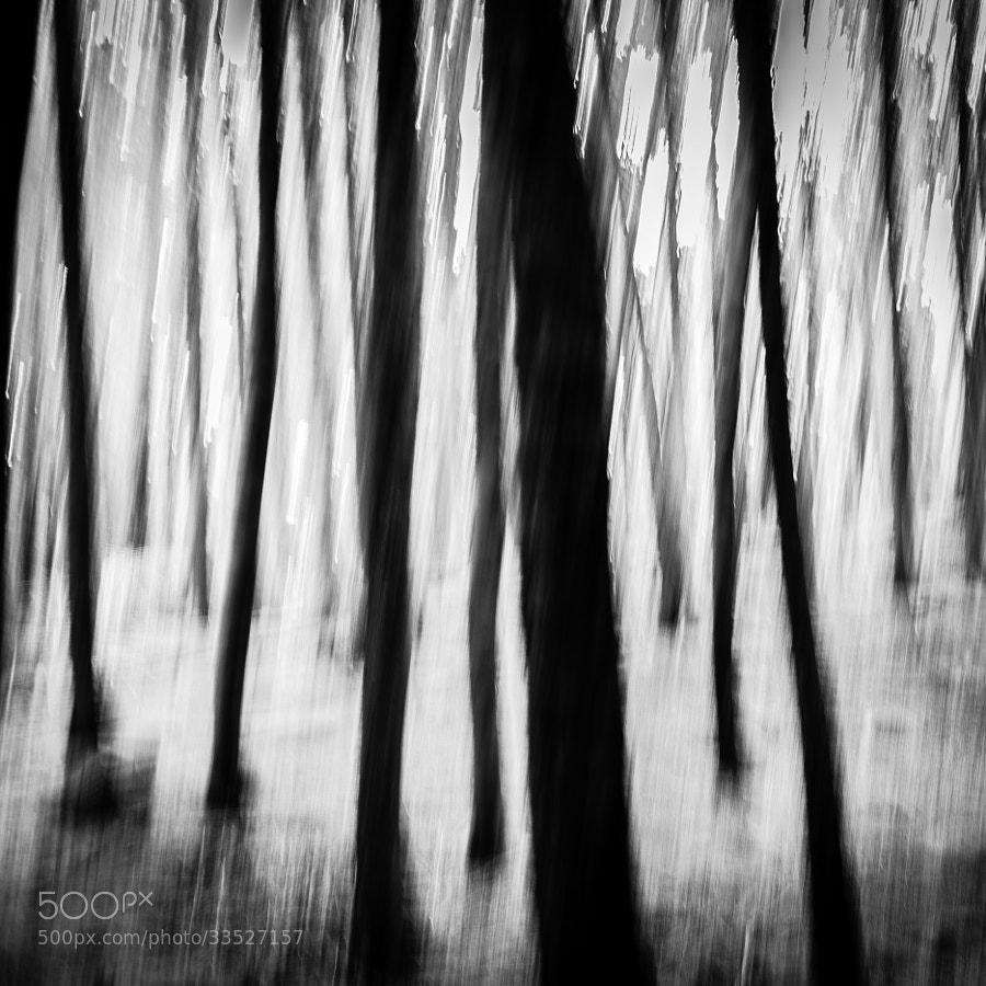 Enchanted Forest by carlos restrepo (carlosrestrepo)) on 500px.com