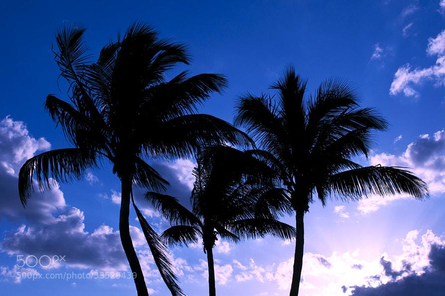 Photograph Sunny Isles Beach sunset by Natalya Laykina on 500px