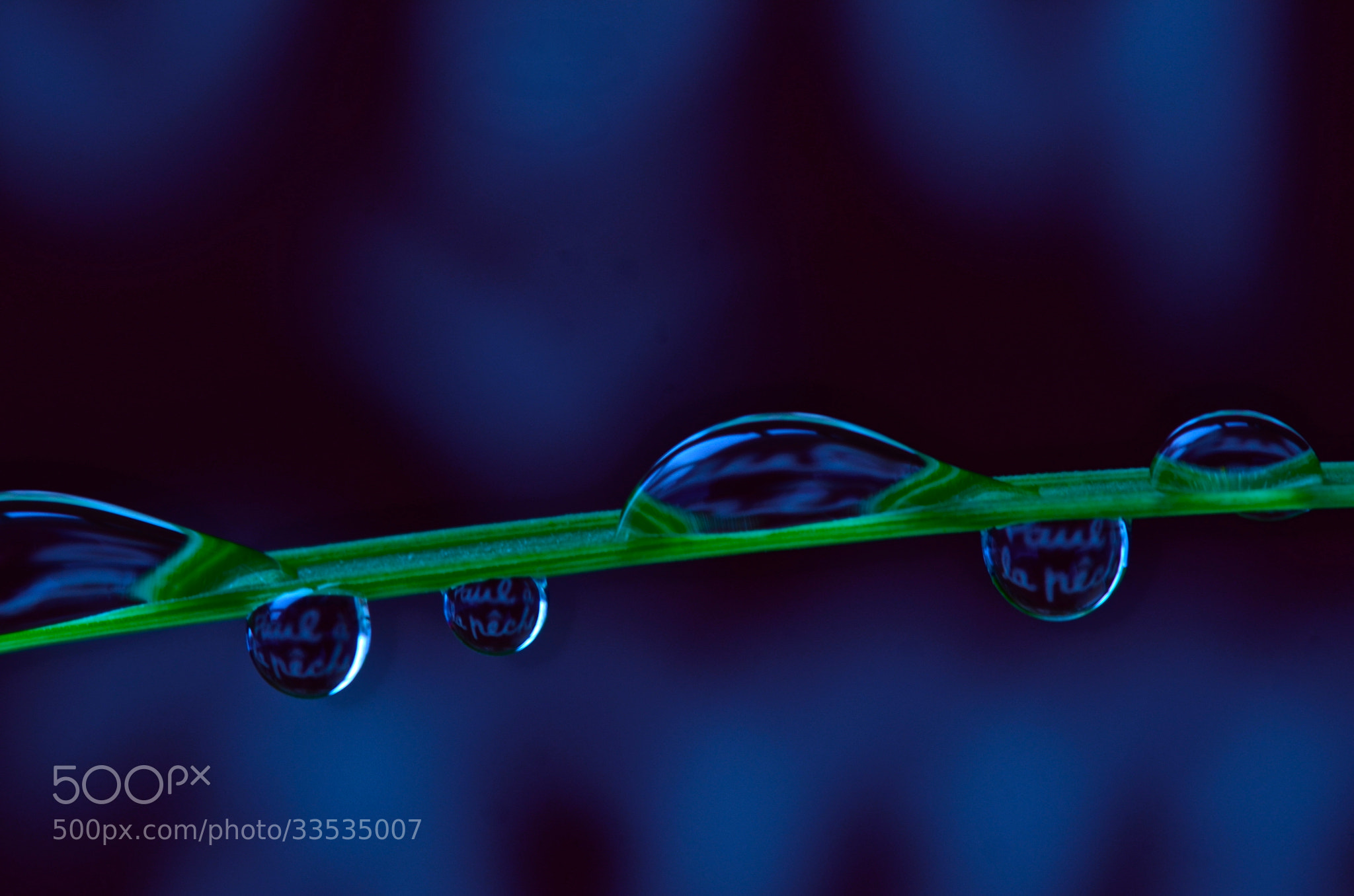 Photograph Macro water droplets by Jinny Montpetit on 500px