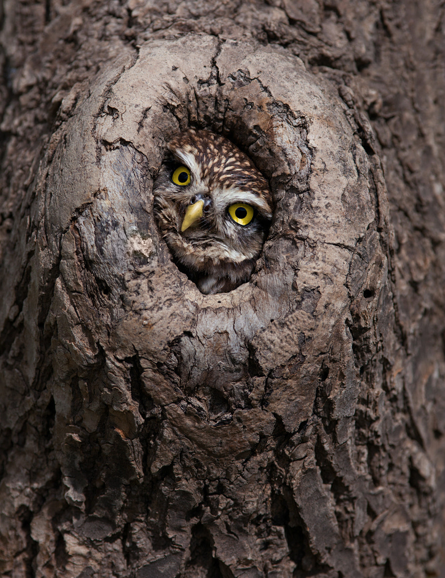 Photograph Peek-a-boo by Billy Currie on 500px