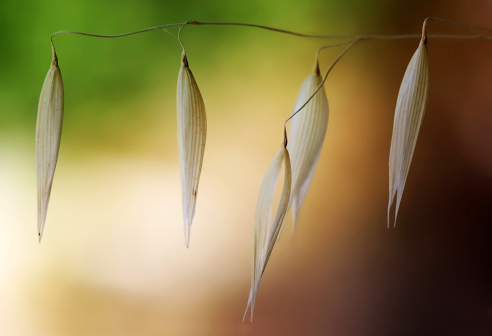 Photograph Simplicity by Ondrej Pakan on 500px