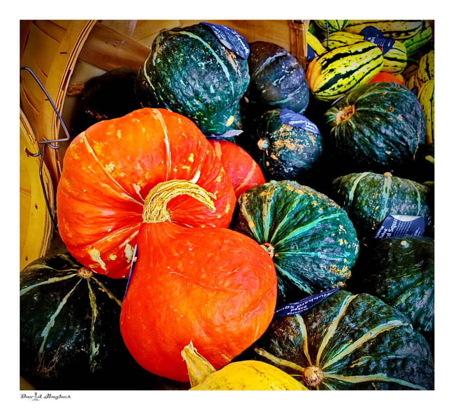 Gourds..again