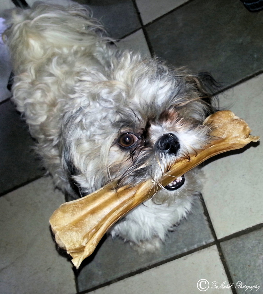 Photograph My little dog ... his Big bone ☻ More ? in set animals --  my doggy Momo by Michel L`Espoir on 500px