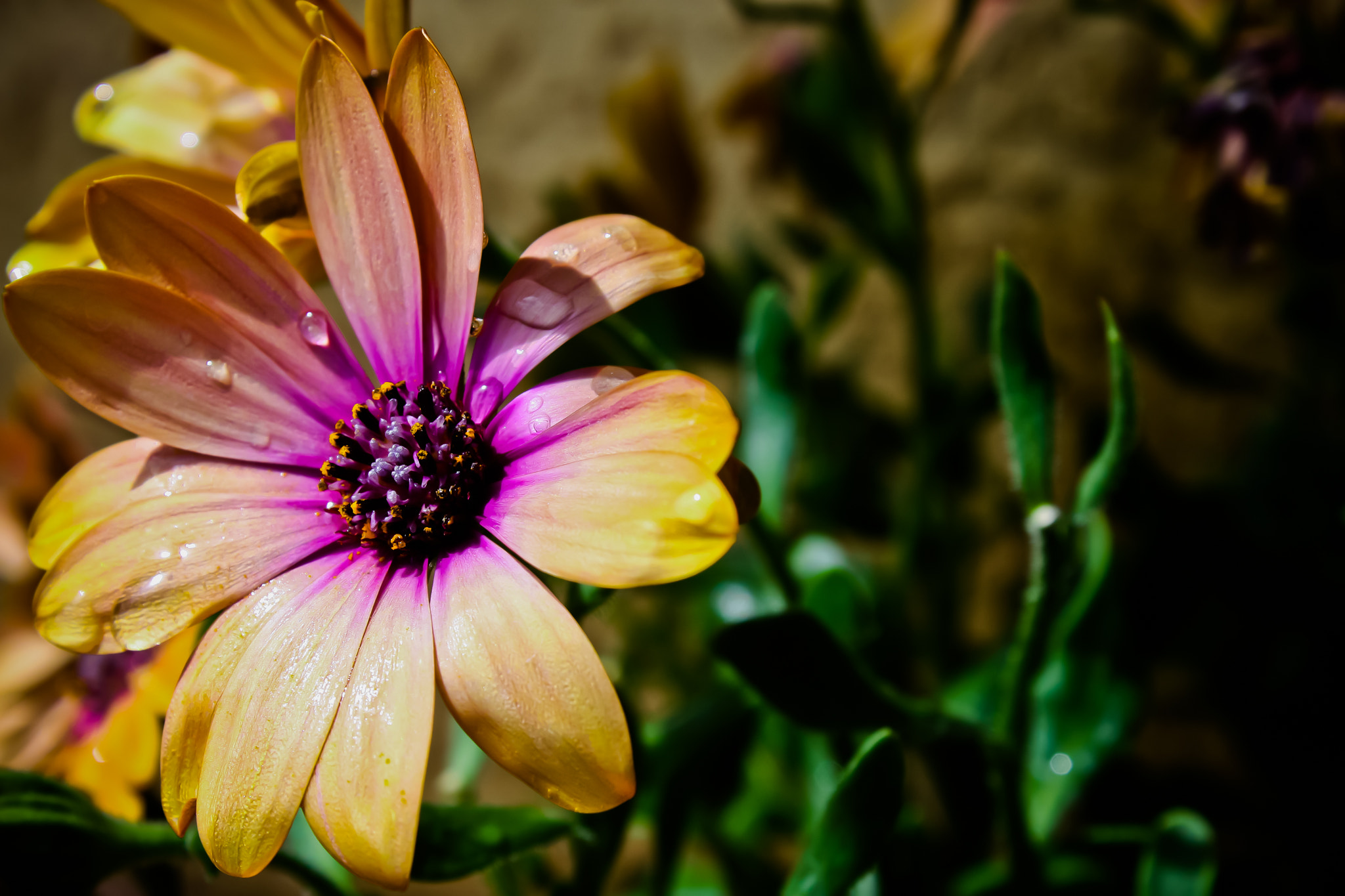Photograph Flower II by Kirk Wallace on 500px