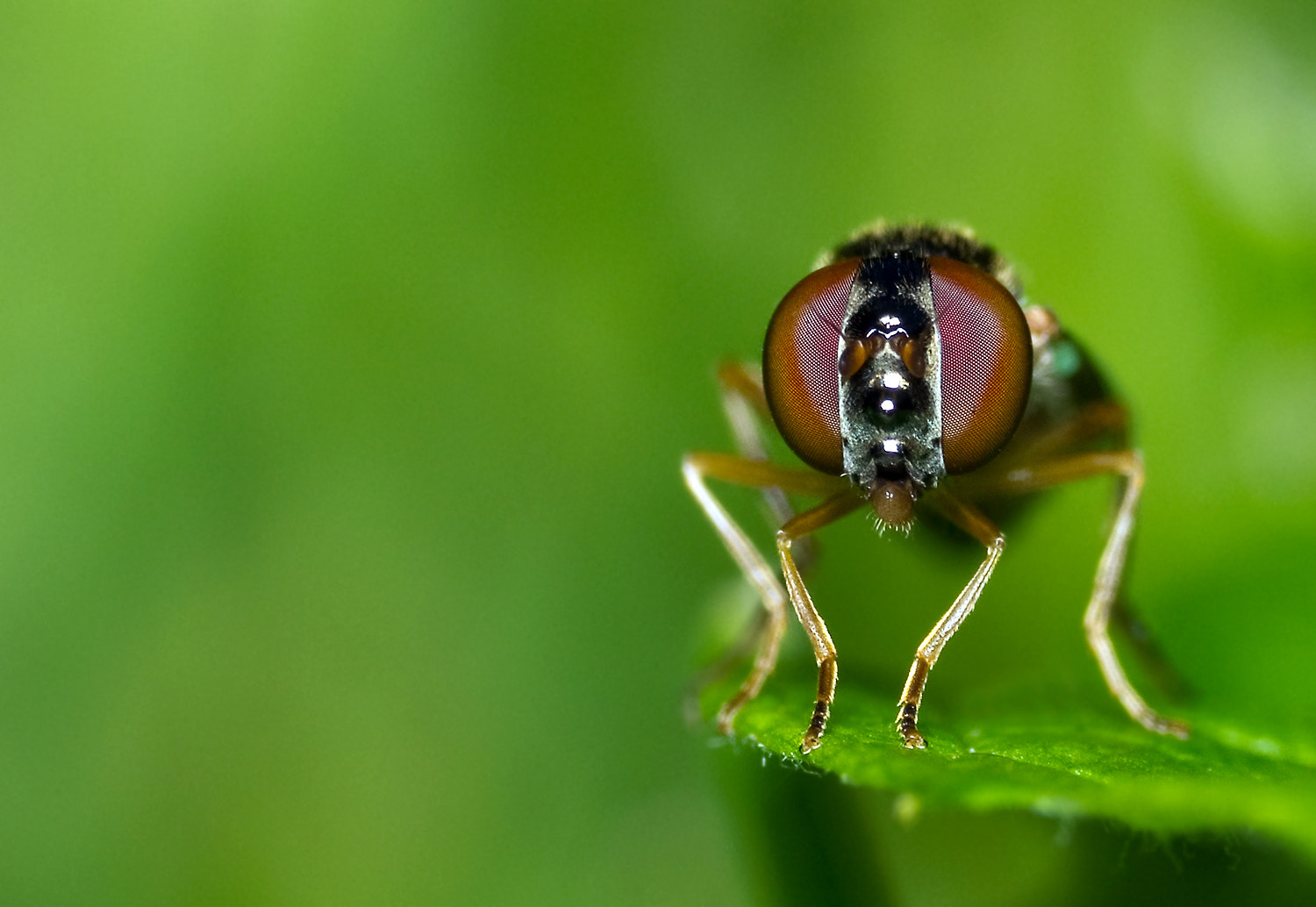 Photograph In The Green by Chris Ruijter on 500px