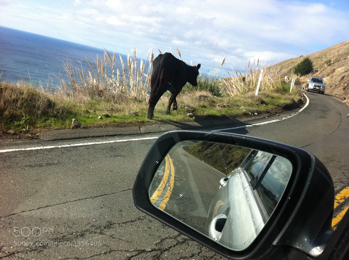 Photograph Cows on the road by Marina Segal on 500px