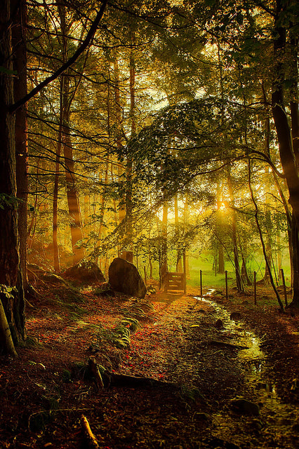 Photograph Morning light by Tore Heggelund on 500px