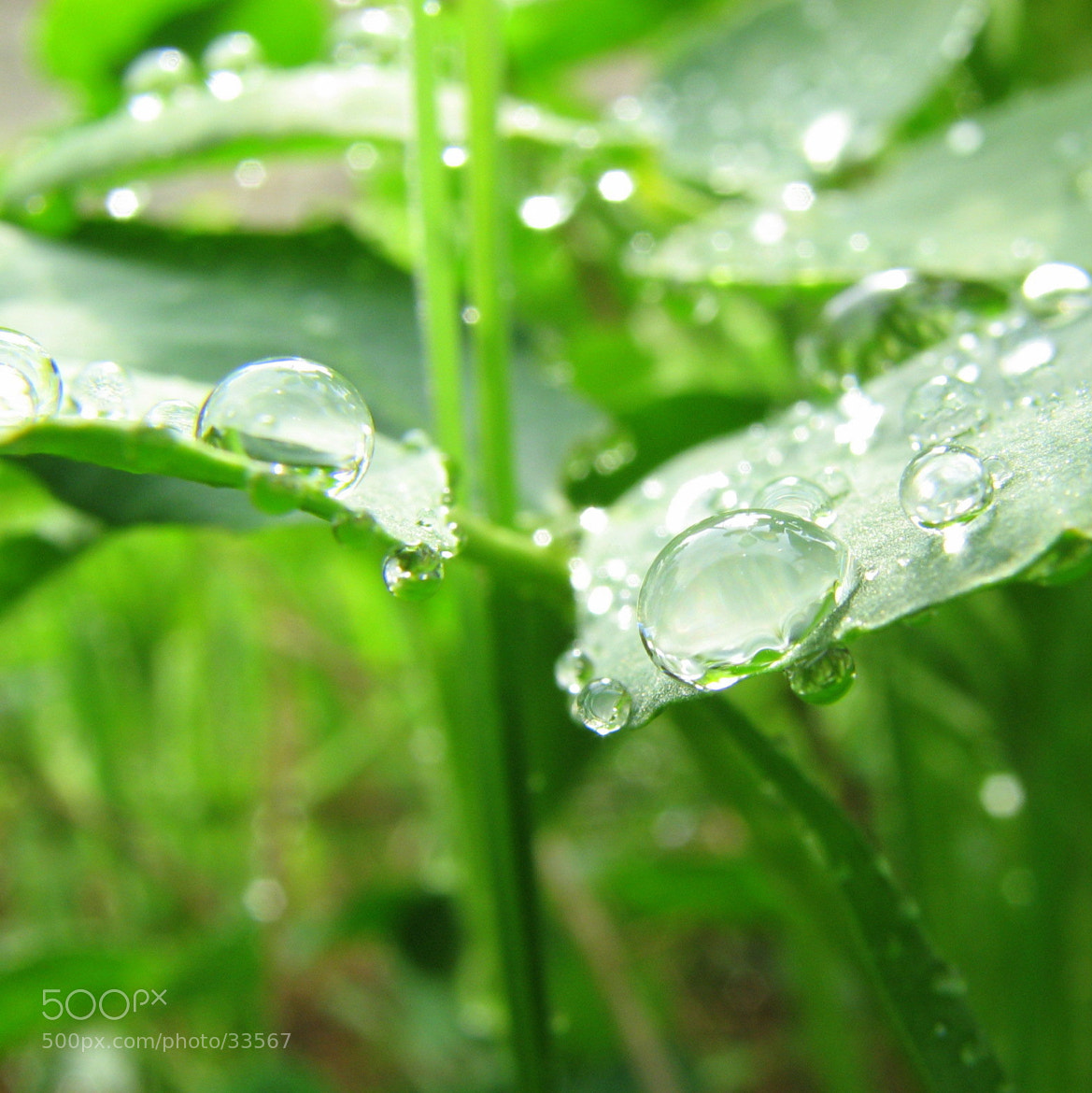 Photograph Капли / Drops  by Go GunSky on 500px