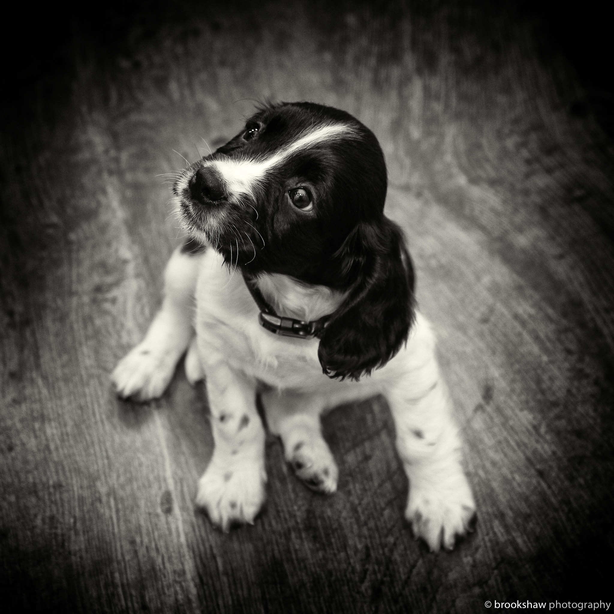 Photograph More Archie! by Gary Brookshaw on 500px