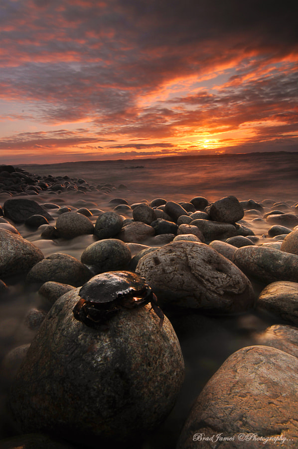 Crabby Sunset by Brad James on 500px.com