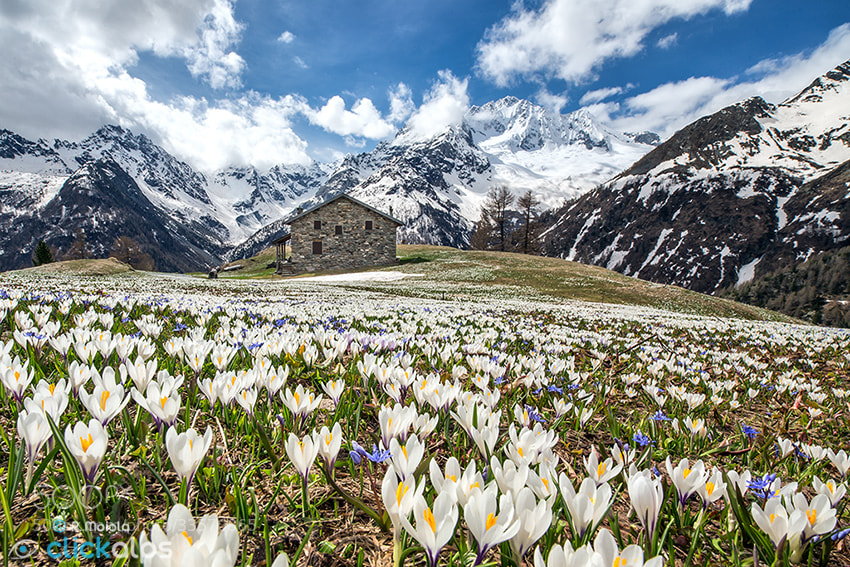 Photograph Springtime in the Alps by Roberto Sysa Moiola on 500px