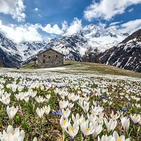 Springtime in the Alps