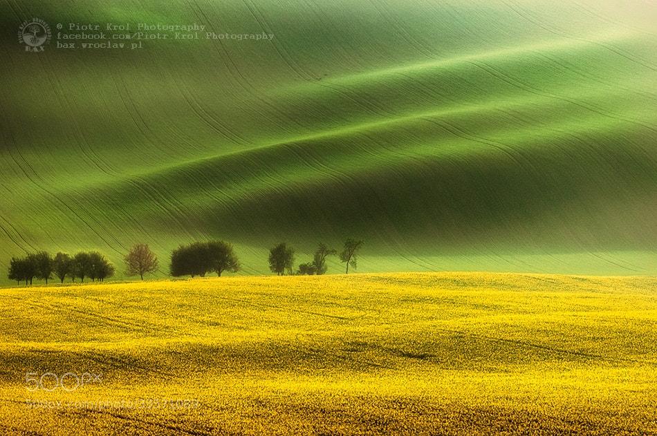 Photograph sunny fields by Piotr Krol on 500px