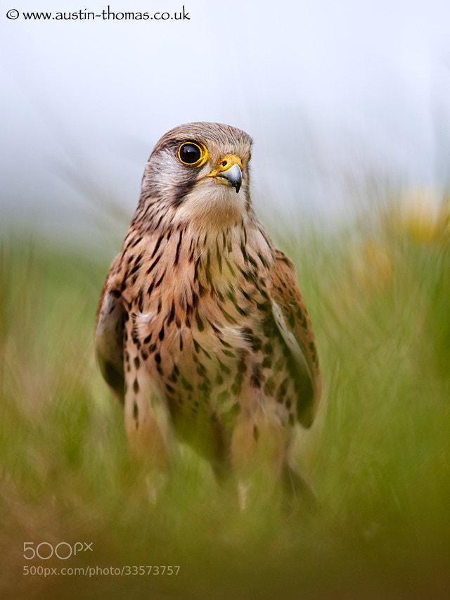 Photograph A birds eye view... by Austin Thomas on 500px