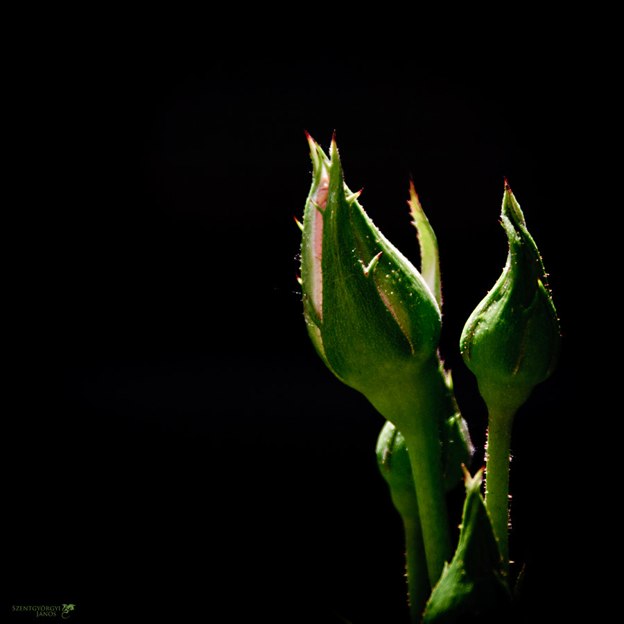 Photograph The day of the Triffids by Szentgyörgyi János on 500px