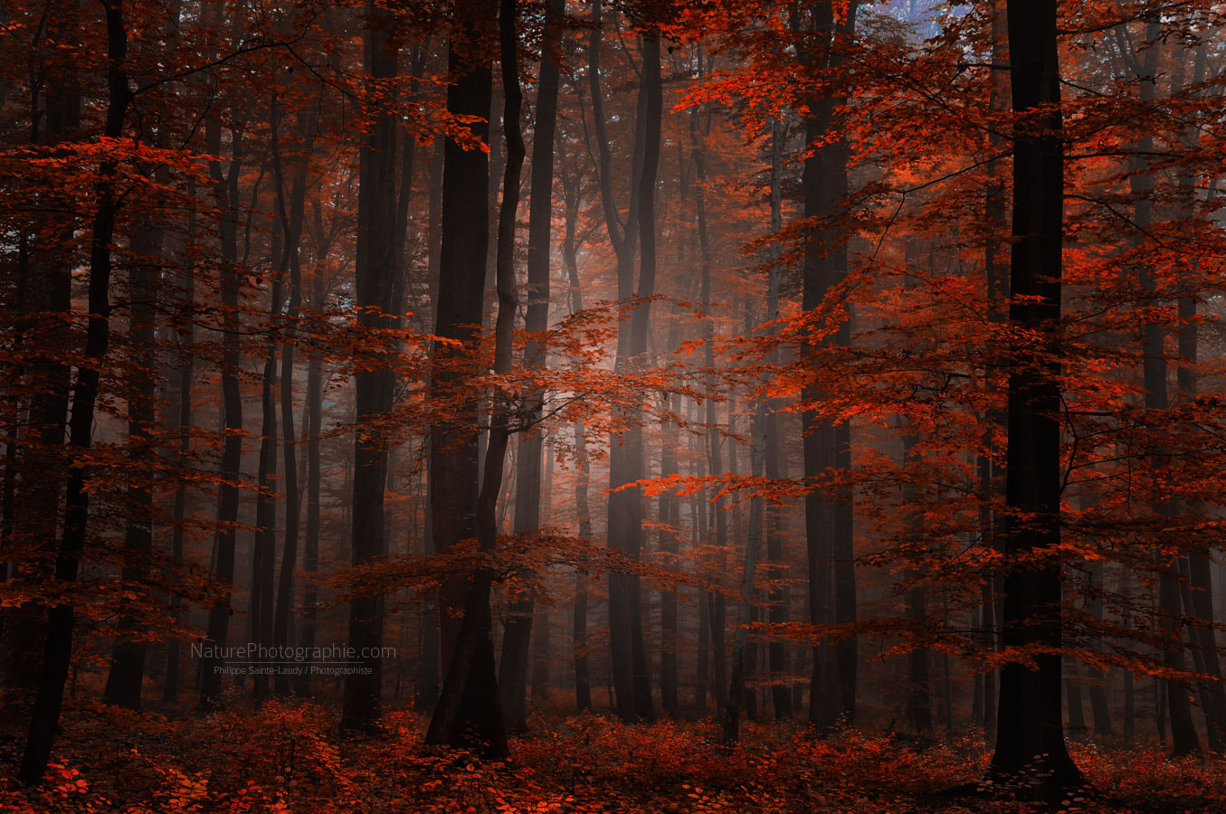 Photograph Spiritual Wood by Philippe Sainte-Laudy on 500px