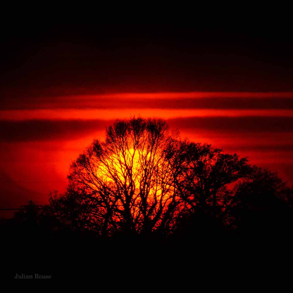 Photograph Sunset through tree by Julian Rouse on 500px