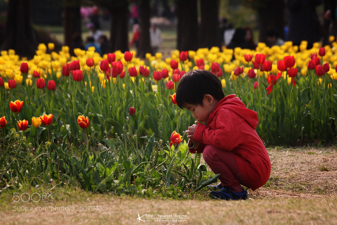 Photograph Kids and spring flowers by kim seong-geun on 500px