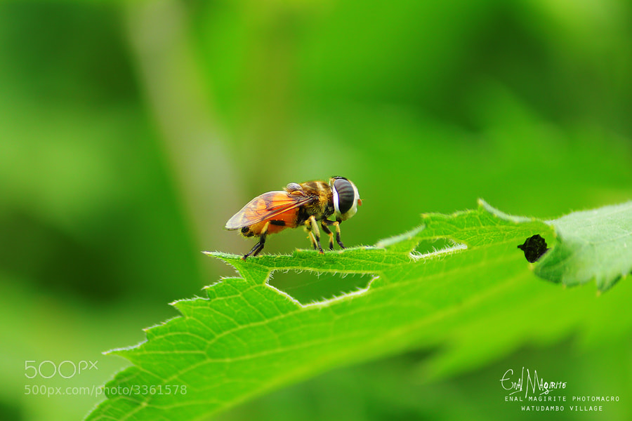Photograph beebee by enal magirite on 500px