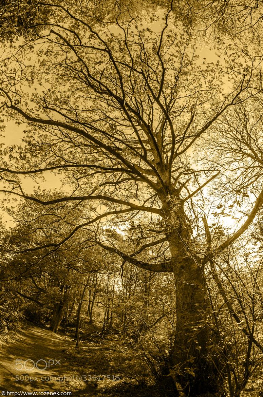 Photograph Mysterious Tree by Pawel Rozenek on 500px
