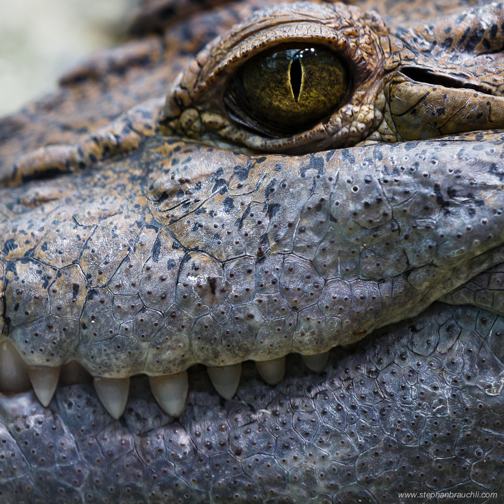 Photograph Happy Croc by Stephan Brauchli on 500px